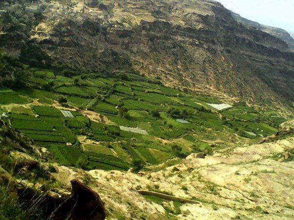 الضالع: مليشيا الحوثي وصالح تنهب مزارع المواطنين بدمت