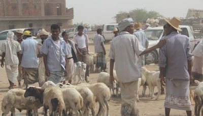 أضاحي العيد في اليمن.. للقادرين فقط وهم أقلية (تقرير خاص)