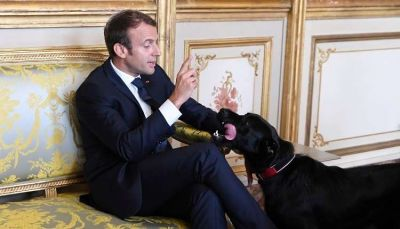 كلب الرئيس الفرنسي يقضي حاجته في الإليزيه أثناء اجتماع مع وزراء