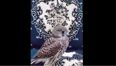"""ناشطون يتداولون مقطع مصور لـ""""صقر"""" يعتز بجنسيته اليمنية (فيديو)"""