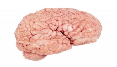 """تعرف على خمس عادات """"قاتلة"""" تدمر خلايا الدماغ"""