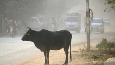 ضرب مواطن مسلم في الهند حتى الموت لاتهامه بذبح بقرة
