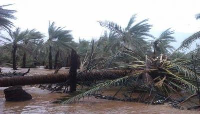 محافظ سقطرى: الجزيرة بدون مخزون تمويني للمواد الغذائية لمواجهة موسم الرياح