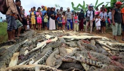 قرويون يقتلون 300 تمساح في إندونيسيا (فيديو)