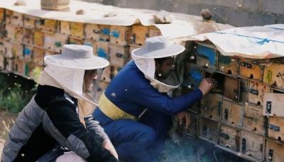 كيف باتت مهنة تربية النحل في اليمن خطرة بسبب الحرب؟