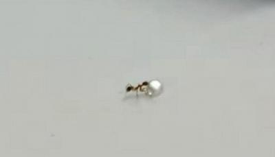 نملة تسرق ألماسة من محل مجوهرات (صور)