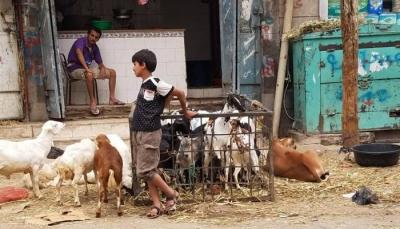 """""""أضحية العيد"""" من ضرورة إلى حُلم لدى اليمنيين (تقرير خاص)"""