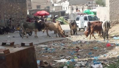 """ارتفاع أسعار الأضاحي يفسد فرحة سكان """"تعز"""" بالعيد (تقرير خاص)"""