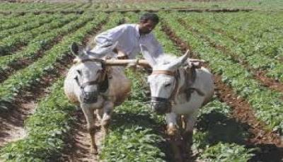 تصاعد أزمات الحرب تهدد زراعة اليمن بالتوقف