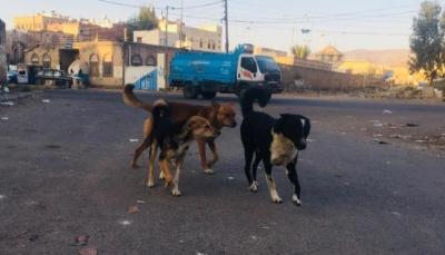 80 ألف كلب ظال يرعبون سكان صنعاء وينشرون الأمراض