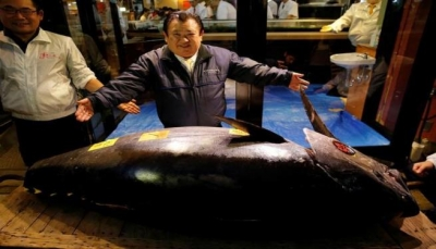 بيع سمكة تونة بـ3 ملايين دولار في مزاد
