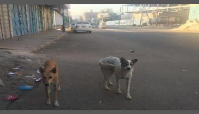 """""""الكلاب"""" في صنعاء كابوس مُرعب يهدد حياة السكان ويؤرق منامهم (تقرير خاص)"""