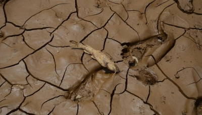 الجفاف يلقي بـ 4 ملايين صومالي بين أنياب المجاعة