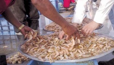 الحكومة توجه بإعتماد ترخيص لإنشاء مصنع لتعليب الأسماك في حضرموت