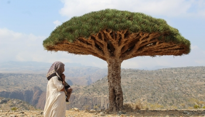 «ACLED» يستعرض كيف أدى نشاط الإمارات والسعودية في سقطرى والمهرة إلى تدهور البيئة الأمنية؟ (ترجمة خاصة)