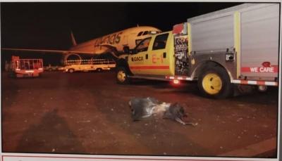 التحالف: إصابة تسعة مدنيين في هجوم لميليشيا الحوثي على مطار أبها بالسعودية