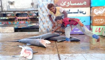 الحكومة تعتمد ميزانية مشروعين في قطاع الثروة السمكية
