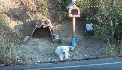 """""""كلب"""" ينتظر صاحبه المتوفي في المكان نفسه عام ونصف (فيديو)"""