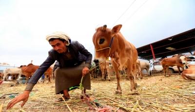 """اليمن يبحث عن لقبه """"السعيد"""" من خلال أضاحى العيد (صور)"""
