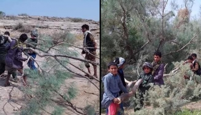 في مأرب.. طلاب يقطعون الأشجار لتغطية أسقف فصولهم الدراسية