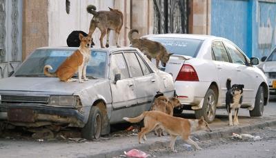 أبين: وفاة ستة أطفال تعرضوا لعضات كلاب مسعورة في لودر