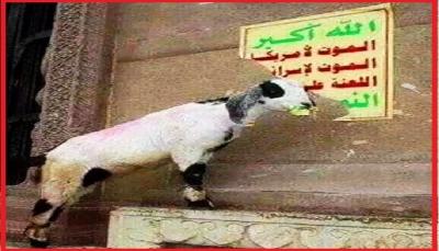 """إب: مليشيا الحوثي تفرض إتاوات مالية على رعاة الأغنام في """"العدين"""""""