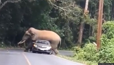 """شاهد - سائق ينجو بأعجوبة من مواجهة فيل في مشهد """"يحبس الانفاس"""""""