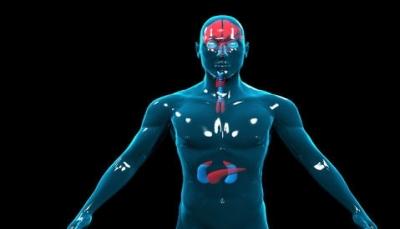 متى تبدأ صحة الجسم بالتدهور بشكل عام؟