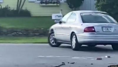 شاهد - كلب يقود سيارة لساعة كاملة