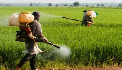 تحذيرات من المبيدات الزراعية المهربة خطر قاتل يصيب المزارع والمستهلك اليمني