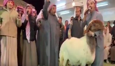 بيع نعجة بنحو 132 ألف دولار في مزاد بالكويت (فيديو)