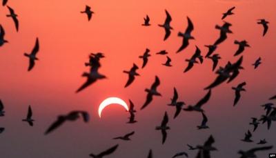 شاهد بالصور.. كيف بدا كسوف الشمس الحلقي النادر