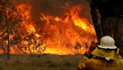 ما هي أسباب حرائق الغابات التي تلتهم الأخضر واليابس في أستراليا؟