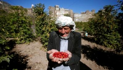 من القات إلى البُن.. إحياء محصول يمني عريق قد يُحدث ثورة زراعية باليمن (ترجمة خاصة)