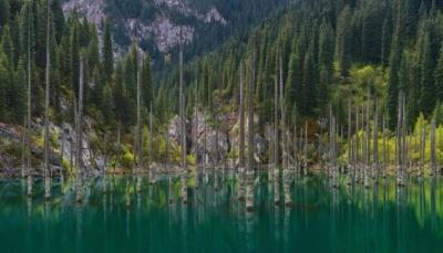 اكتشاف أقدم غابة تحت الماء لم يصلها البشر منذ 60 ألف عام