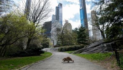 شركات نيويورك تستعد ببطء لمعاودة العمل بعد أكثر من شهر من الشلل الاقتصادي
