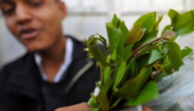 الإقبال لا يزال شديدا على أسواق القات في اليمن رغم مخاطر كورونا