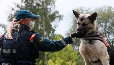 كلب بوليسي ينقذ فتاة  مراهقة من الاغتصاب