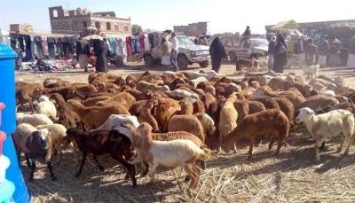 الأمم المتحدة تعلن توقيف برنامج تحصين المواشي باليمن جراء نقص التمويل