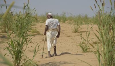 الأمم المتحدة: خمسة ملايين يمني على بعد خطوة من المجاعة