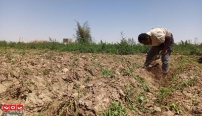 """""""غلاء للبذور والأسمدة"""".. المزارعون بمأرب يخوضون حرب أخرى من أجل العيش"""