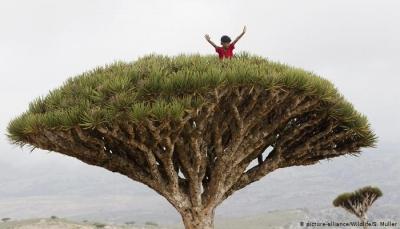 جزيرة السعادة سقطرى.. طبيعتها وموقعها الاستراتيجي يجعلانها عرضة لصراع البقاء