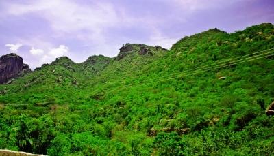 جبل بُرع بالحديدة.. مصور يوثق بقايا غابات شبه استوائية مذهلة
