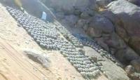 قائد عسكري: الفرق الهندسية نزعت 500 لغم وعبوة ناسفة في منطقتين بالجوف