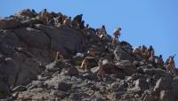 الجيش اليمني يحشد قواته لبدء عملية واسعة لتحرير صنعاء وعمران من الحوثيين