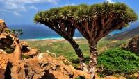 """الحكومة تنجح في الإبقاء على """"أرخبيل سقطرى"""" ضمن قائمة التراث العالمي"""