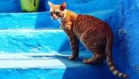 قطة تودي بحياة شخص في عضة قاتلة