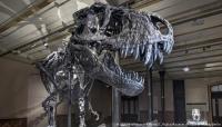 اكتشاف أكبر ديناصور في العالم!