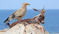 منظمة بريطانية تكشف عن المخاطر التي تهدد النظام البيئي الفريد لأرخبيل سقطرى (ترجمة خاصة)