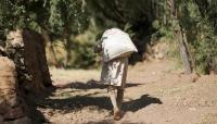 """الحرب تدمر قطاع """"العسل اليمني"""" وصعوبات كبيره تواجه تربية النحل"""